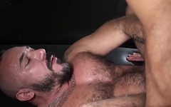 Handsome bears sucking and banging bareback style